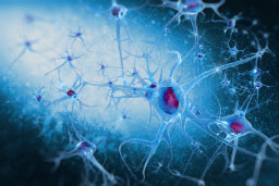 neurons_small_2x